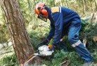 Abercrombie Tree felling services 21