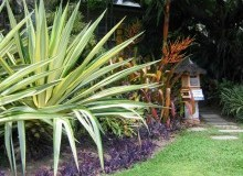 Kwikfynd Tropical Landscaping abercrombie